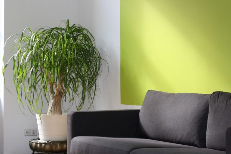 Green in apartment